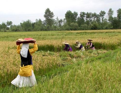 بررسی وضعیت صنعت کشاورزی ایران در مستندی از علی خسروی