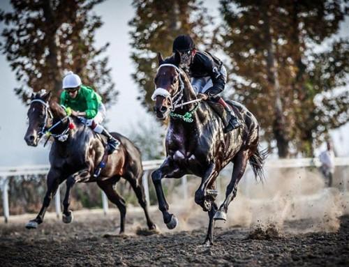 بهاره افشاری، مستندی درباره «سریک» اسب محبوب سردار آزمون می سازد