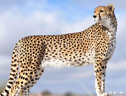 «در گرداب انقراض» نگاهی به تعارضات بین فعالیت های معادن و حیات وحش ایران