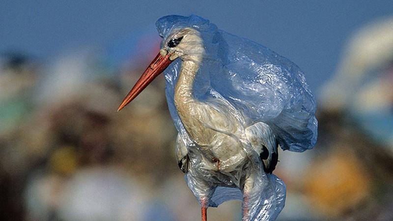 «غرق شدن در پلاستیک» در مستند چینیها