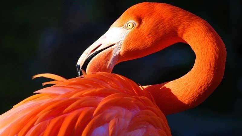 مستند «مرغ آتش»، نگاهی به زیستگاه جدید فلامینگوها در ایران